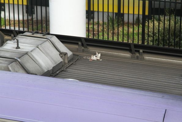 Dead bird on the roof of a VLocity train