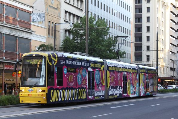 Flexity 103 wearing a scatterbrained looking