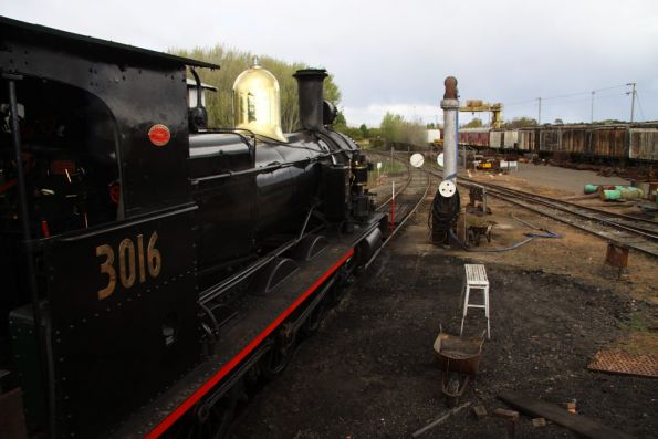 Steam loco 3016 stabled in the yard