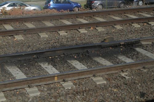 Grease pot in place on the tracks at Caulfield station
