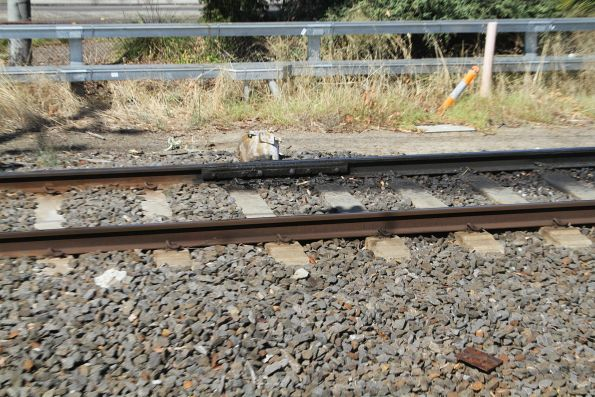 Rail lubricator in up line near Burnley station
