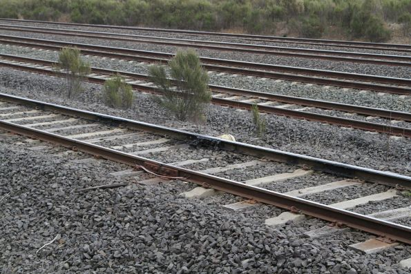 Grease pot in the Apex quarry siding at Kilmore East