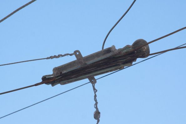 Frog in the overhead wires