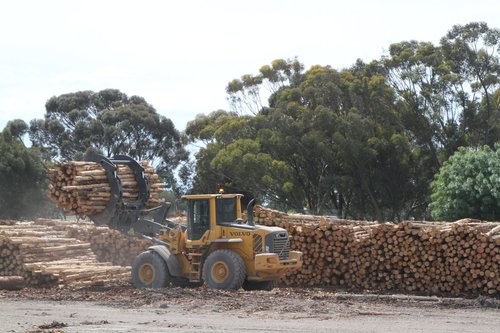 Loader goes back for another claw full of logs