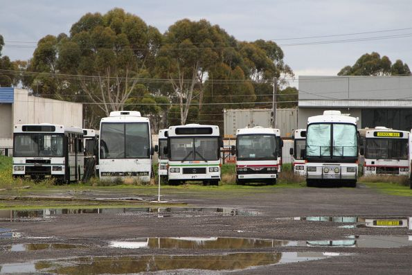 Mixed bag of retired high floor buses out the back of the CDC Sunshine depot