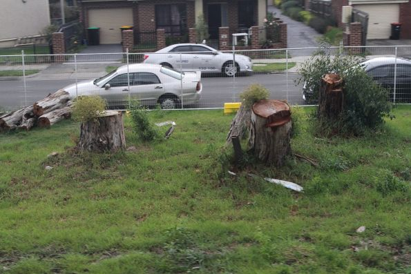Chopped down gum trees east of Noble Park station, already sprouting regrowth