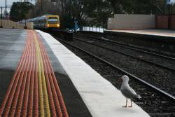A seagull sits on platform 2 as a down train arrives into Glenferrie