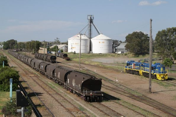 GrainCorp 48208 and 48204 stabled in the yard at Cootamundra