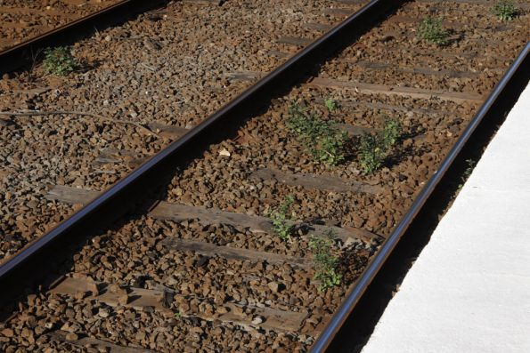 Weeds growing between the tracks at Glenferrie