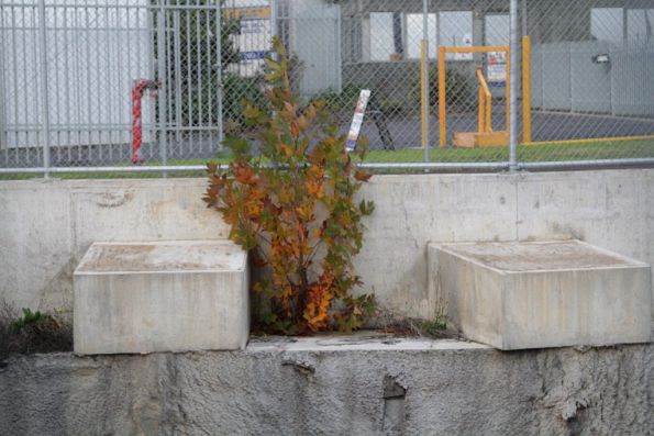Tree growing out of the concrete cutting walls at Mitcham station