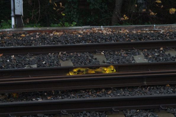 Temporary fishplate fixed to a running rail near Surrey Hills station