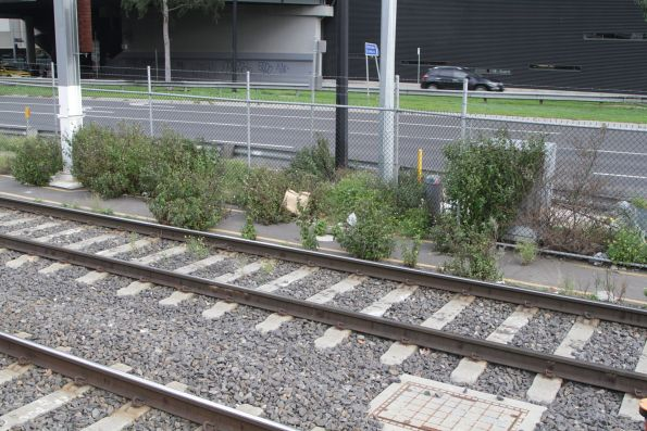 Bushes grow beside the tracks outside Southern Cross Station