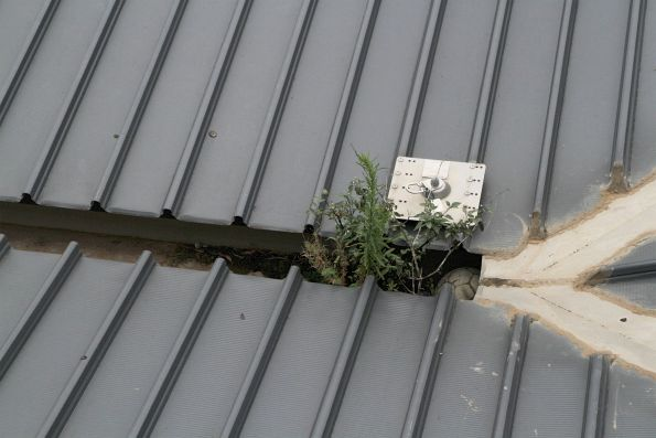 Weeds grow out of the guttering at Sunshine station