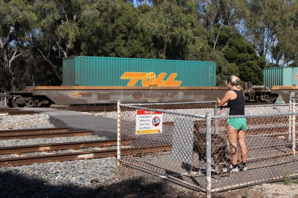 Jogger waiting for a PN freight to roll past at Torrens Junction