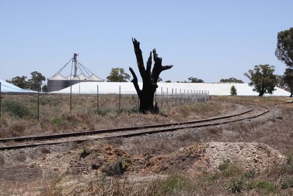 Looking west towards the broad gauge grain silos at Tocumwal