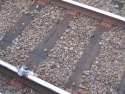 Bird squashed on tracks at Glenferrie Station - foul play suspected...