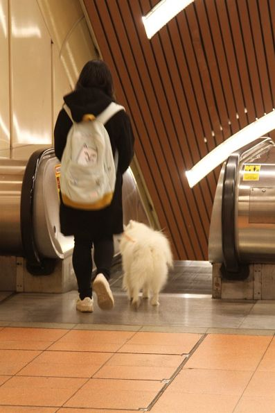 Someone taking their dog for a walk down the escalators at Flagstaff station