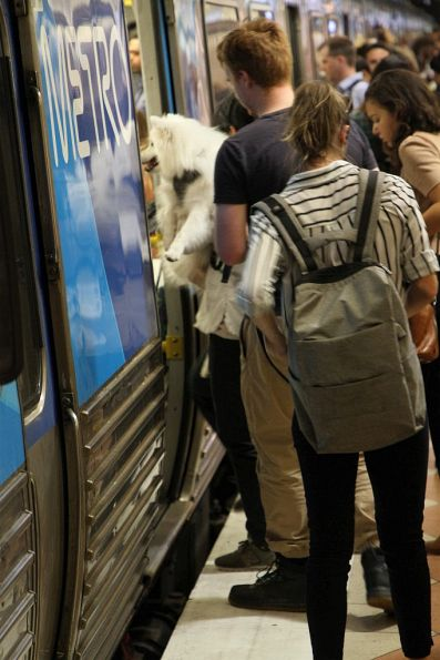 Passengers climbs aboard a peak hour train with their dog in their arms