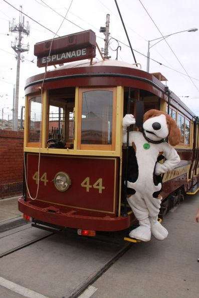 'Jake' the TramTracker mascot poses on Tram 44