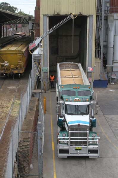 Semi trailer about to unload another load of grain at Kensington