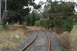 Looking up the disused Cresco siding from Bayview Road
