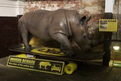Life sized 'Beware The Rhino' promotion