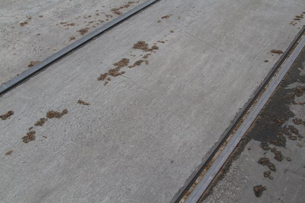 Seeds from plane trees mix with sand on the tram rails