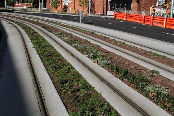 Succulent plants between the rails on Southbank Boulevard