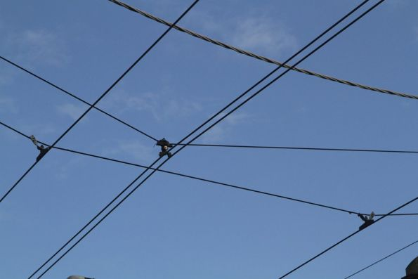 Additional pair of feeder cables run between the contact wires along Smith Street