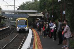 Siemens train arrives into Toorak station with a City Loop service