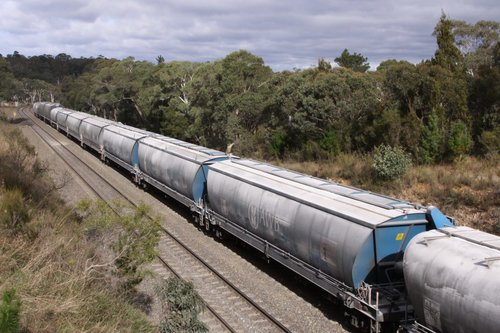 Mix of hoppers all covered with flour - the train runs between Nowra and Narrandera for Manildra Group