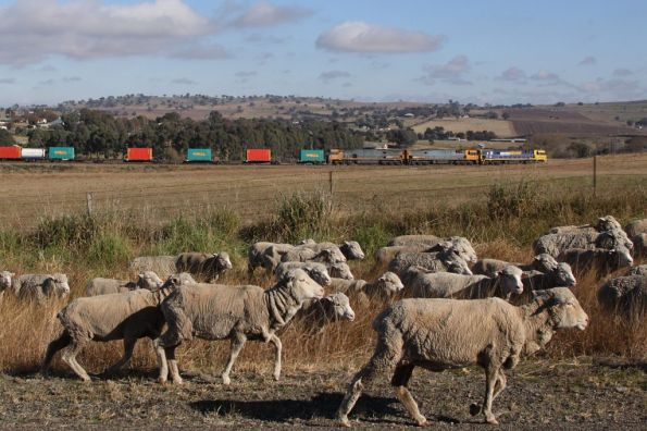 Passing sheep for the slaughterhouse: NR37, NR87 and NR64 at Harden