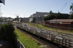 Empty cattle train rolls past Exhibition station
