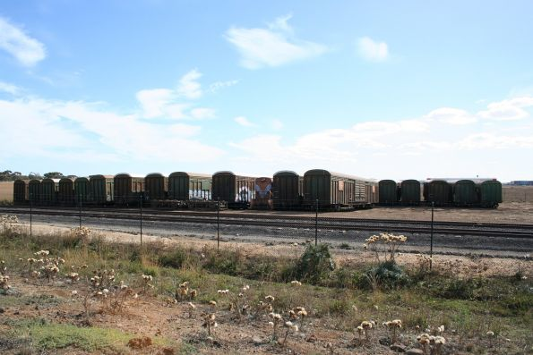 Stored ABFY wagons at SCT Laverton