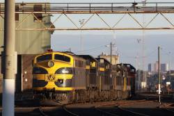 S303 leads a rake of locos at South Dynon, on hire to El Zorro for broad gauge grain services