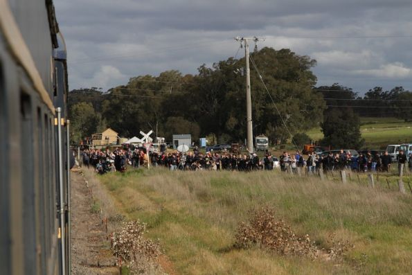 Easily of a hundred railfans at Muckleford getting the exact same shot!