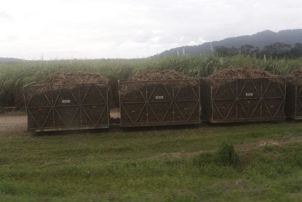 Cane bins loaded with sugar cane near Deeral