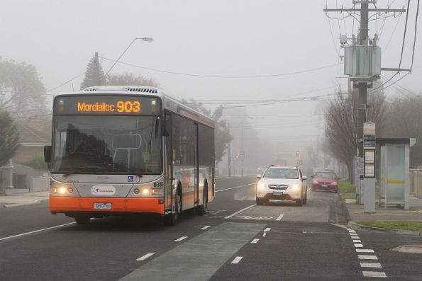 Transdev #8385 7497AO on route 903 along Hampshire Road, Sunshine