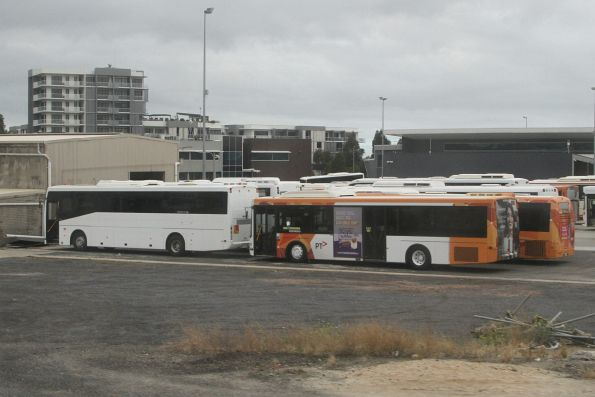 Collection of Ventura buses parked at their Dandenong depot